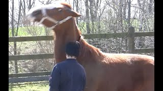 Gewalt aus der Kindheit zeigt sich im Pferdeumgang am deutlichsten