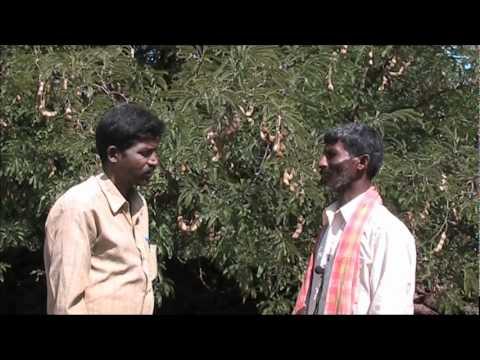Tamarind cultivation Kannada BAIF Karnataka