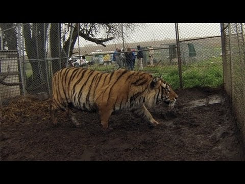 Big Cats and Other Exotic Animals Rescued in Kansas