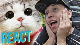 O GATO MAIS LINDO DO MUNDO - React / Reagindo
