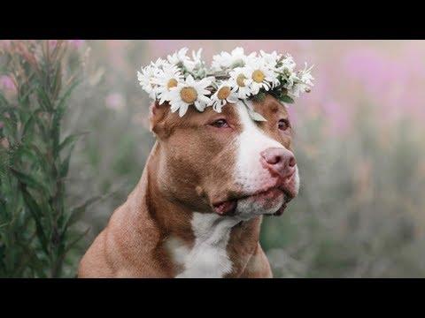 10 Заблуждений о собаках, в которые мы верим