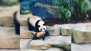 BEST ANIMALS OF 2018 | Funny Animals Video | Funny Dog | Funny Panda