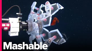 There's An Underwater Pokéball That Helps Us Study Delicate Sea Creatures Without Harming Them