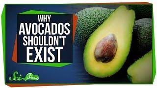 Why Avocados Shouldn