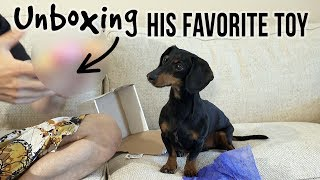 Crusoe Unboxing His FAVORITE Dog Toy!