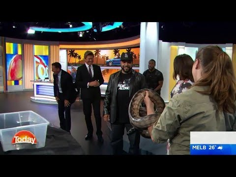 Kevin Hart freaks out over snake on The Today Show - Karl Stefanovic