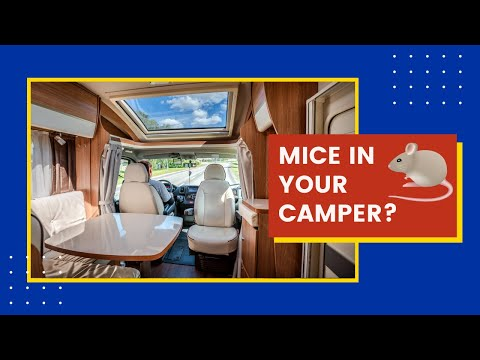 how to get rid of mice smell in camper