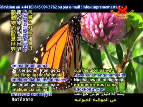 Monarch butterflies use internal compass to find their way