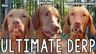 Ultimate Derp Compilation