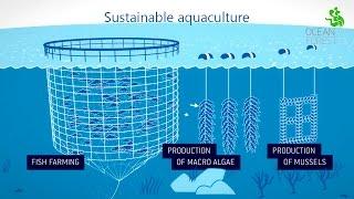 Ocean Forest - Sustainable aquaculture