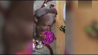 Animals Eating Funny