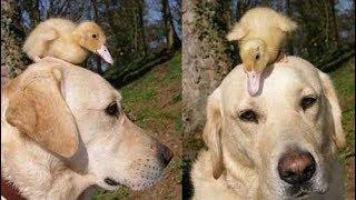 जानवरों की ऐसी दोस्ती देखकर 5 Most Unbelievable Unlikely Animal Friendships