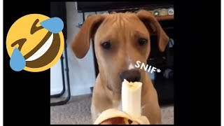 Dog Food Eating Funny - Best Dog Videos