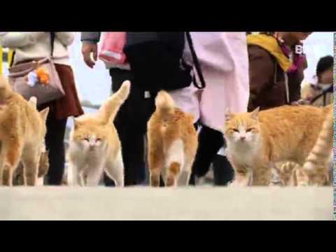 Japanische Insel versinkt in Katzen