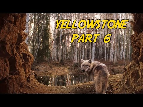 Yellowstone National Park Part 6 - The Wolf Encounter