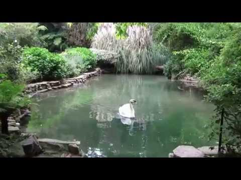 A little tour of the pond and stream at the Hotel Bel Air and Wolfgang Puck Hotel Bel Air.