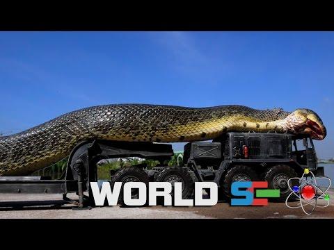 Анаконда - самая большая и опасная змея в мире [National Geographic]