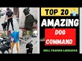 Dog Training Video| Top 20 Amazing Dog Command | Well Trained Labrador |Basic To Advance| In Hindi