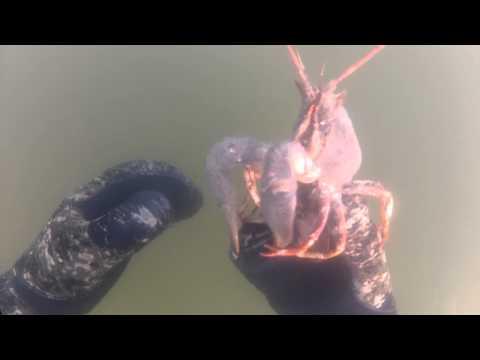 подводная рыбалка на раков видео