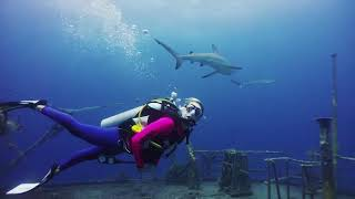 Diving with Big Animals in Nassau with Stuart Cove's Dive Bahamas