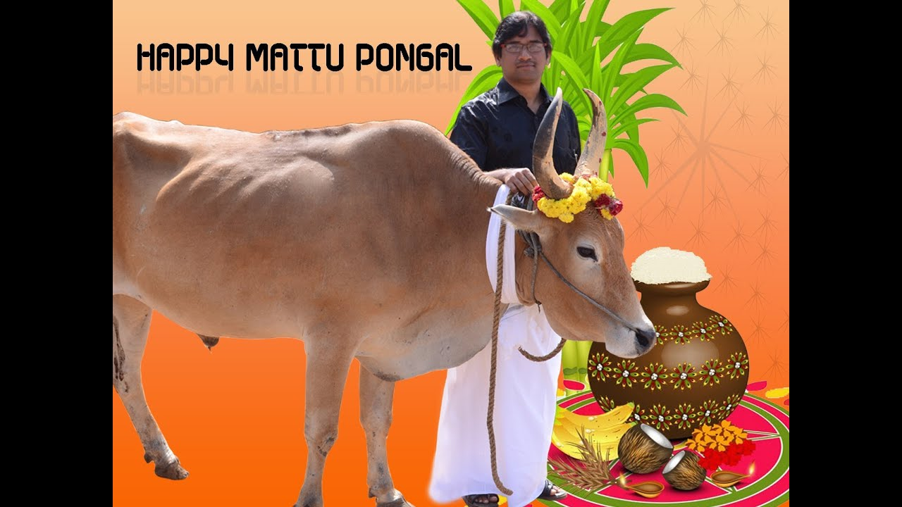 Mattu pongal kannu pidi akrossfo mp3songdcom official websitedownload latest mp3 songs m4hsunfo