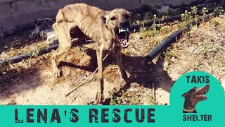 Fearful, aggresive dog close to dying transforms to sweet and loving -  Lena's story - Takis shelter