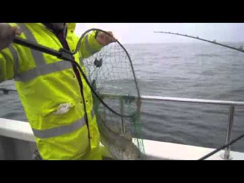 Wreck Fishing for Cod - Fishing on Grey Viking II - Brighton