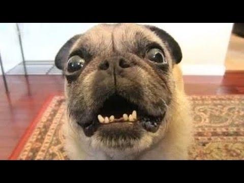 Videos de risa - Perros asustados por pedos 2014