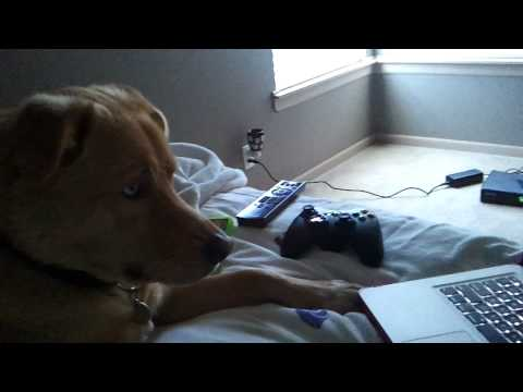 Tosh Dog Watching Porn. video