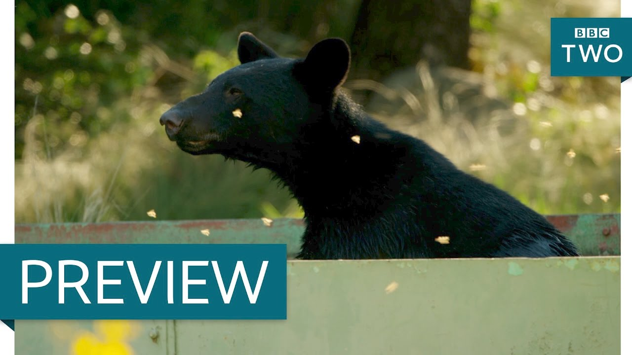 Bear cubs take a bath - Mexico: Earth's Festival of Life: Preview Episode 1 - BBC Two