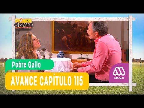 Pobre Gallo - Avance Capítulo 115