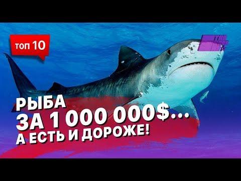 Рыба за миллион долларов... А есть и дороже! Смотрите ТОП 10 самых дорогих рыб!