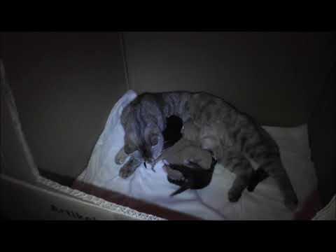 Veleda met kittens