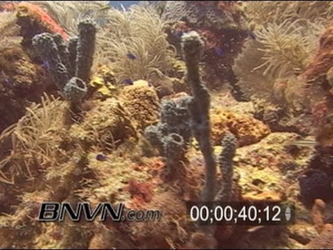7/2/2005 Dry Tortugas Nice Reefs Scuba Diving Footage