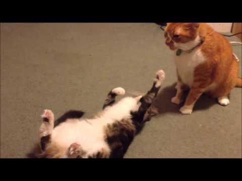 diy cat toys martha stewart