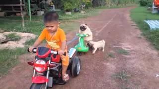 Chó chơi xe máy điện cùng bé