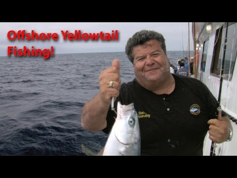 Chief, Offshore Fishing for Yellowtail   SPORT FISHING