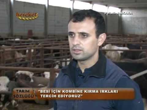 ÇOMAK BESİCİLİK BEREKET TV'DE