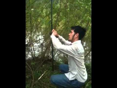 ban luoi bay chim - bán lưới bẫy chim