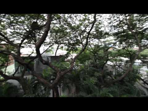 Huge Condo for Rent at Raintree Sukhumvit 41   Bangkok Condo Finder