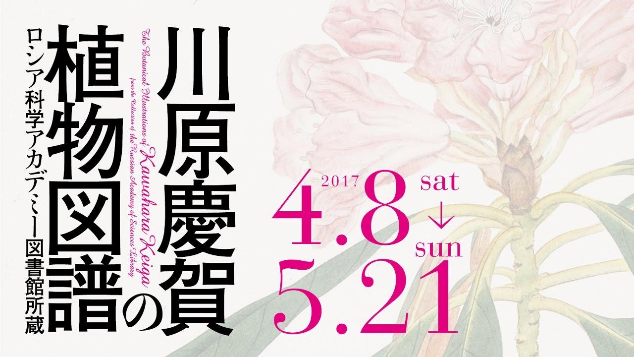 川原慶賀の画像 p1_31