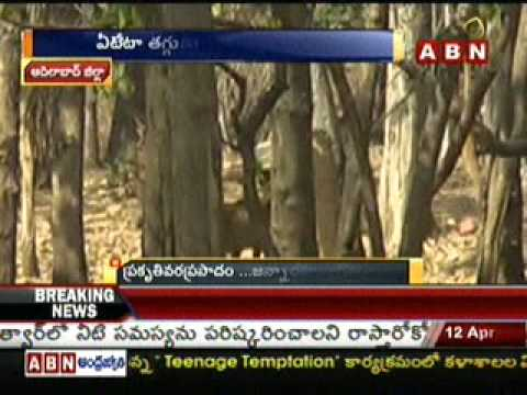 Tiger Sanctuary in Adilabad - ABN Special Story