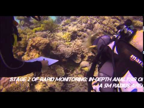Eye on the Reef   Rapid Monitoring Marine Conservation Program Great Barrier Reef