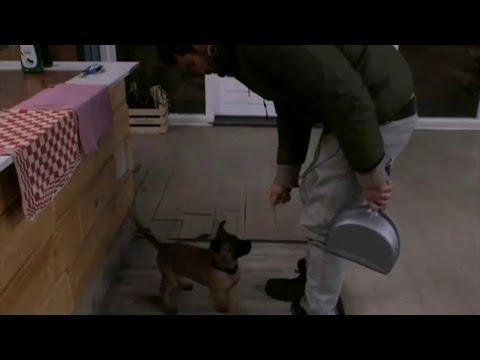 Utopiaan Ivan mishandelt puppy