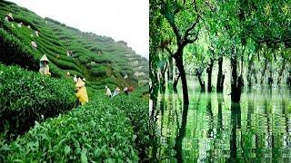 Top 5 Tourist Places Of Sylhet