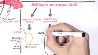 Microbiology - Bacteria Antibiotic Resistance