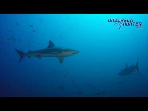 Galapagos Shark + Diver at Cocos Island