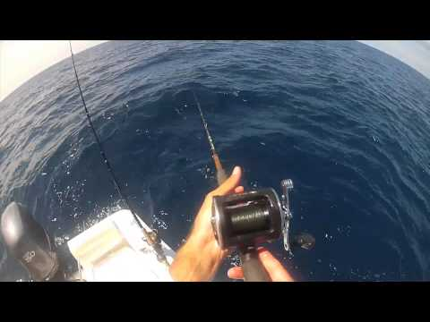 SARASOTA FLORIDA King Fish, Barracuda and Grouper Fishing