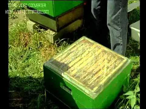 Пчеловодство. Ротационное разведение пчел часть1.(Э.Б)
