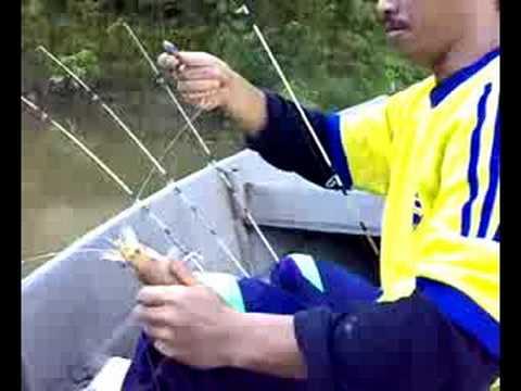 Freshwater Prawns Fishing  /Memancing Udang Galah